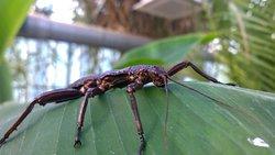 Bugtopia Hornsea