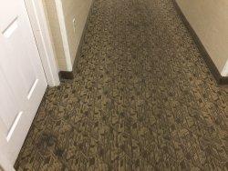 Nastiest Carpets Award Winner!