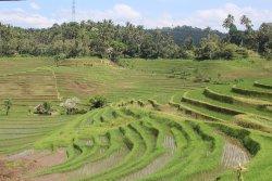 Desa Belimbing