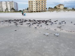 The Florida Air Force resting on the beach!
