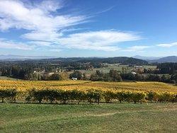 Sarver Winery