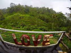 Ubud Destination - Day Tour