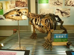 ‪Ashoro Museum of Paleontology‬