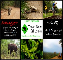 Travel Now Sri Lanka