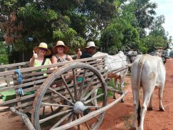 Ox Cart Adventure Tours