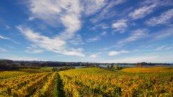 Rimu Grove Winery