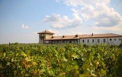 Mosmieri Kakheti Wine Centre