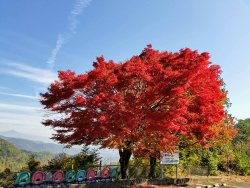 Arashiyama-Takao Parkway
