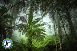 Kona Cloud Forest - Guided Walking Tours