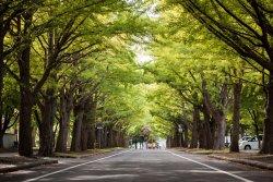 北海道大学札幌キャンパス
