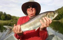 The Upper Delaware River has a great springtime shad run. Look at this beauty!