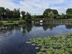 Ngatea Water Gardens