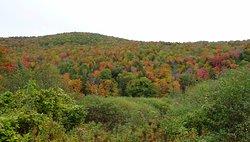 Beautiful fall colors