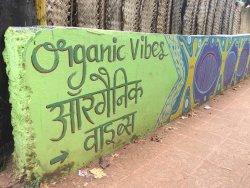 Organic Vibes