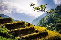 Rice terrace at Hoang Su Phi, Northwest Vietnam