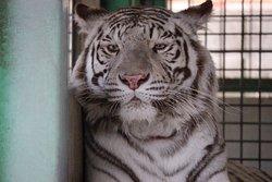 Shirotori Zoo