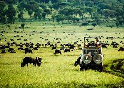 Wayo Africa