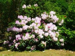 Wonderful gardens and flowers