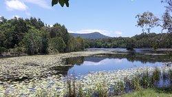 Cattana Wetlands