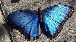 'TripAdvisor' from the web at 'https://media-cdn.tripadvisor.com/media/photo-f/11/34/c3/b8/butterfly-at-the-bitterfly.jpg'