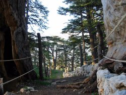 Lebanon Trips and Tours