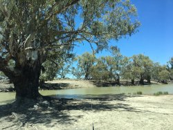Great Darling Anabranch