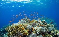 ABT Divers
