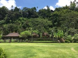 Special villa with beautiful rice field view