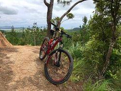 Paihia Mountain Bike Rentals and Shuttles