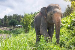 Thong Elephant Sanctuary Chiang Mai