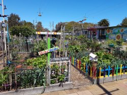 Veg Out Community Gardens St Kilda