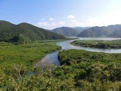 国定公園マングローブ原生林