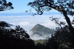Flora Hut and Mount Arthur Hut tracks