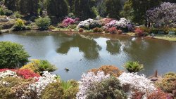 Just a snippet of what to expect, many areas like this, plus Japanese garden