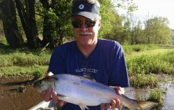 """""""Poor Man's Salmon"""" -- The Upper Delaware River Shad Run. Don't Miss It!"""