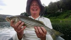 Bonus Fish! A Nice Strong Upper Delaware River Striped Bass. Wow!