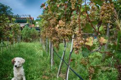 Plavinci Organic Winery