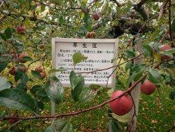 りんご史料館