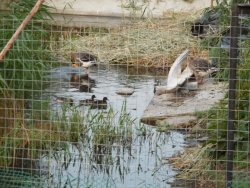 duck pond outside restaurant