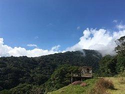 Bosque Caricias los Leones