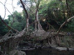 Meghalaya's Mawlynnong