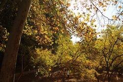 Garden view in fall