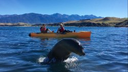 Seal Kayak Kaikoura