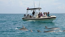 Palm Beach Dolphin Tours