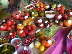 collection de 200 tomates (possibilité d'autocueillette)