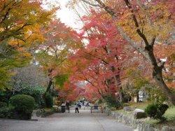 神社から逆に参道を見る。