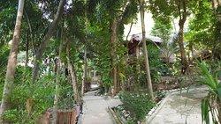 Anlage mittem im Dschungel mt steilen Wegen