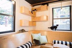 Neko - A Cat Cafe