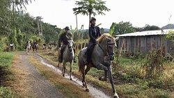 Horse Trail Thailand