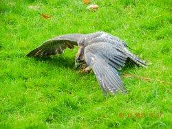 Hawks Of Steele